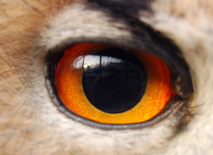 To improve, scrutiny is required. (Picture: eagle owl eye by Windwalker, via wikimedia)