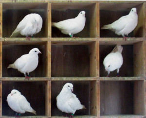To pigeon-hole or to fight the box? (Picture via Wikipedia)