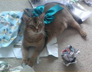 Christmas in my house also includes helpful cats. Like Cinnamon here. (Picture: mine)
